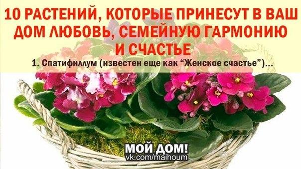 Цветы приносящие в дом удачу и счастья